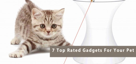 7 Top Rated Gadgets For Your Pet