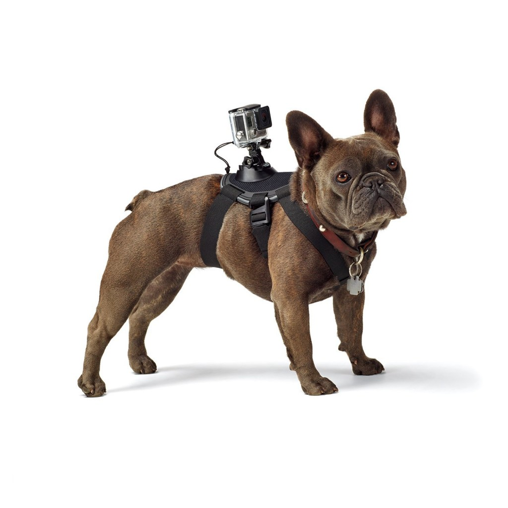 Brilliant Gadgets For Photographers- GoPro fetch
